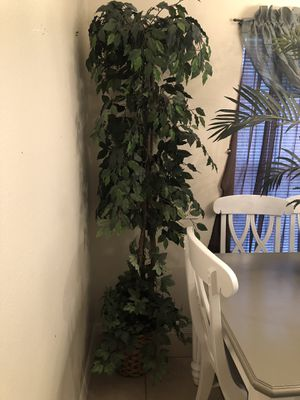 Fake plants-freeee for Sale in Kissimmee, FL