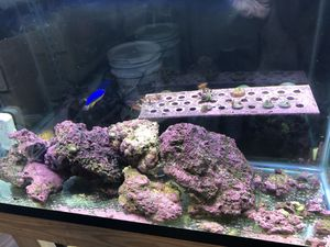Completes saltwater setup for Sale in Cypress, TX