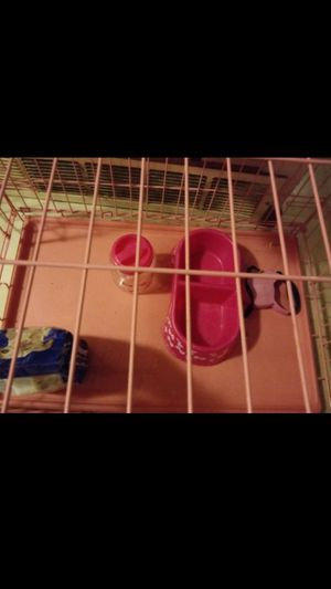 Pink dog crate medium size dogs for Sale in Columbus, OH