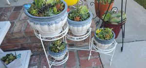 Beautiful 5pc set plant stand and 4 high end ceramic planters packed with succullents valued $189 for Sale in Anaheim, CA