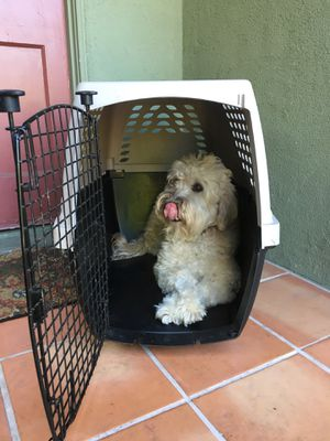 1 Medium Dog Crate Plastic Travel Kennel For Sale - Used Once! for Sale in Los Angeles, CA