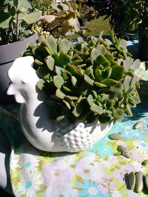 White ceramic planter for Sale in Whittier, CA