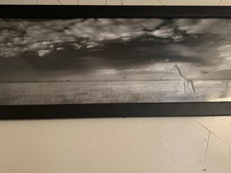 Black And White Giraffe Picture for Sale in Pittsburgh,  PA
