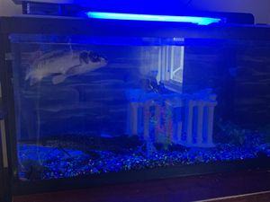 75g fish tank with accessories for Sale in Niagara Falls, ON