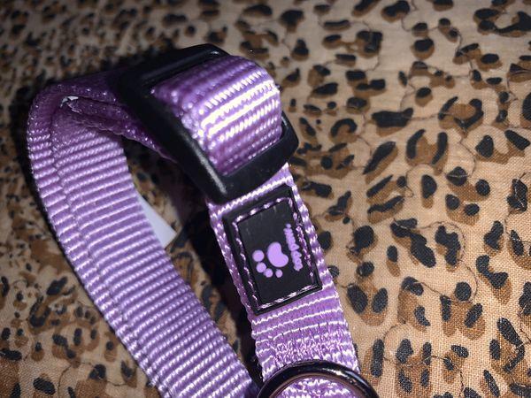 Dog Leash & Collar