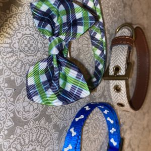 Puppy Collars for Sale in Los Angeles, CA