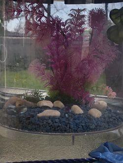 3.5 Gallon Fish Tank for Sale in Rancho Santa Margarita,  CA