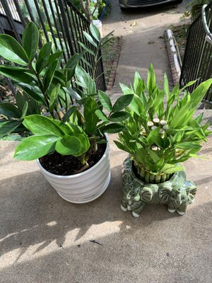 ZZ plant + bamboo ( vase included) for Sale in Norcross, GA
