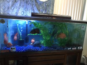 Fish tank and stand 110 gallons for Sale in Bloomington, CA