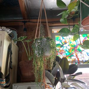 Macrame Plant Hanger for Sale in Hayward, CA