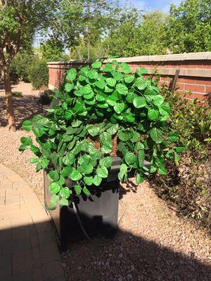 Massif artificial plant in wicker basket for Sale in Litchfield Park, AZ