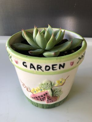 Beautiful Succulent Planter-makes a great Valentine's Day Gift! for Sale in Sarasota, FL