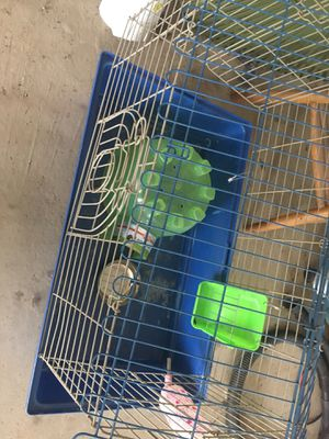 Guinea pig cage with accessories for Sale in Linden, PA