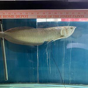 fish Tank for Sale in Laguna Niguel, CA