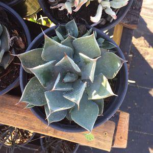 Plants for Sale in Long Beach, CA