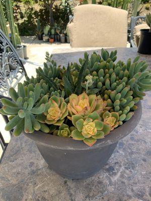 Beautiful succulent arrangement for Sale in Spring Valley, CA