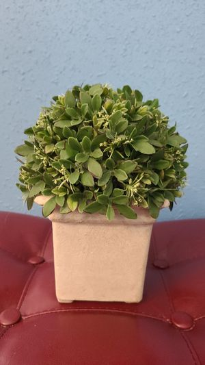 Artificial Boxwood Topiary for Sale in Galveston, TX