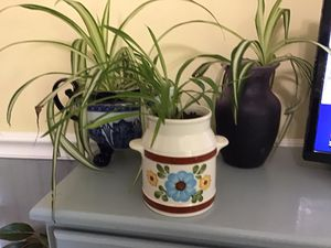 House plants I. Unique planters for Sale in Woodbridge, VA