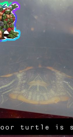 Red Eared Slider for Sale in Santee,  CA