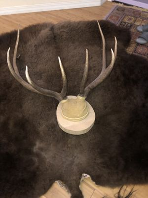 Matched set natural fresh 5 x 5 Antlers Mounted 5 point for Sale in Peyton, CO