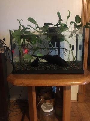 Fish tank for Sale in Wimauma, FL