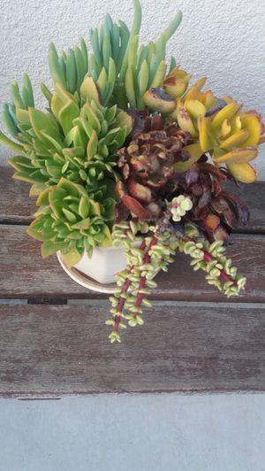beautiful succulent arrangement for Sale in Rancho Cucamonga, CA