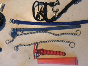 Dog Collars for Sale in Taylorsville, UT