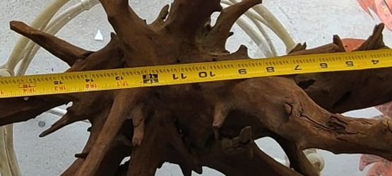 Malaysian Driftwood Root for Sale in Tampa,  FL