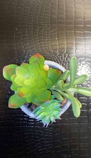Cute fake plant in suction cup for Sale in Naples, FL