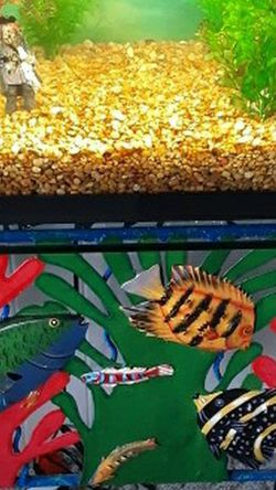 Fish Aquarium/Tank Complete for Sale in Fort Myers,  FL