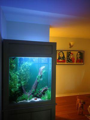 Aquarium for Sale in Herndon, VA