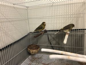 $250 bird cage included everything for Sale in Inkster, MI
