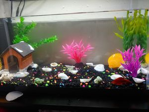 10 Gallon tank, everything included for Sale in San Diego, CA