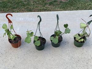 RARE HOYA KERRII $45 EACH heart shaped plant indoor outdoor hanging basket home decor succulent cactus cacti planta plantas garden ART SPRING for Sale in Los Angeles, CA