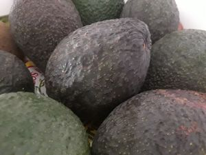 Fresh California avocados for Sale in Pico Rivera, CA