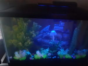 30 gallon fish tank for Sale in Tampa, FL