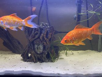 20g Fish tank for Sale in Aptos,  CA