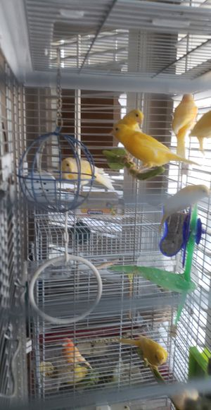 Canary/cage for Sale in Manteca, CA