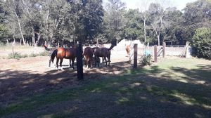 Near Horses: Lot for Sale! for Sale in Columbia, SC