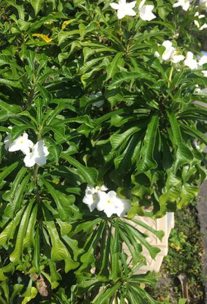 Flowes etc for Sale in Delray Beach, FL