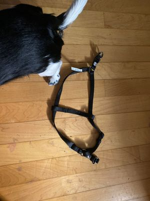 Size small dog harness step through(my dog is not for sale :p) for Sale in Derby, CT