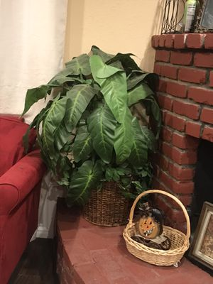 Artificial plant for Sale in Eastvale, CA