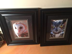 Photos of Owls with Frames for Sale in St. Louis, MO
