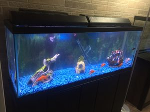 "Fish tank 2""x4"" with all color stones and cable for Sale in Warren, MI"