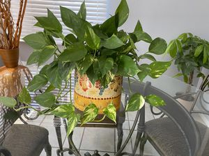 Natural plant for Sale in Las Vegas, NV
