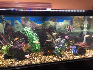 75 gallons aquarium with wet dry rated for 120 gallons for Sale in Miami, FL