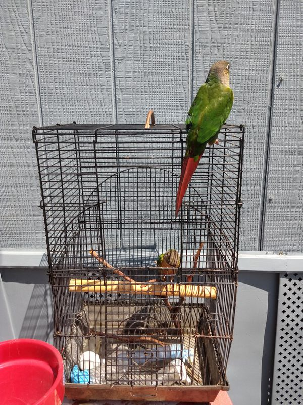 Black Cage great for small birds