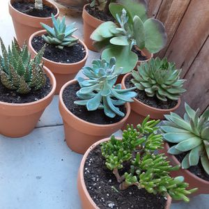 Succulent Plant And Cactus Plant in a Clay Pot $15 each for Sale in Anaheim, CA