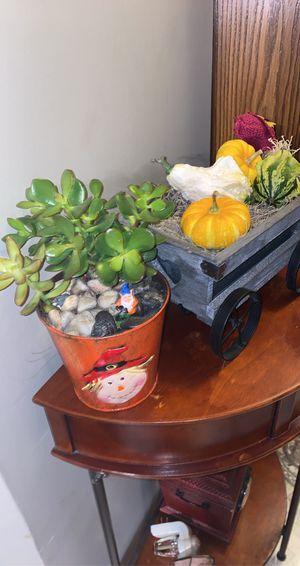 Fall theme succulent arrangements for Sale in Oak Forest, IL