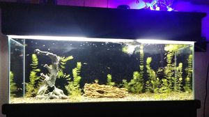 55 GAL. Fish aquarium for Sale in San Jacinto, CA